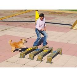 Saut en longueur canin